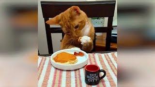 Смешные кошки и коты, приколы с собаками июнь 2019, новые приколы с котами funny cats animals #84