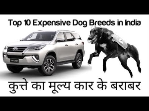 Top 10 Expensive dog breeds in india | Top 10 expensive dogs |