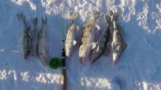 Зимняя рыбалка Кама Судак и Берш на тюльку