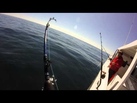 Big 60+lb Cobia Offshore Fishing Gulf of Mexico