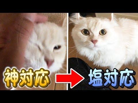 猫に神対応→塩対応したらどうなる?!