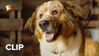 A Dog's Journey Movie Clip - Opening Scene (2019) | FandangoNOW Extras