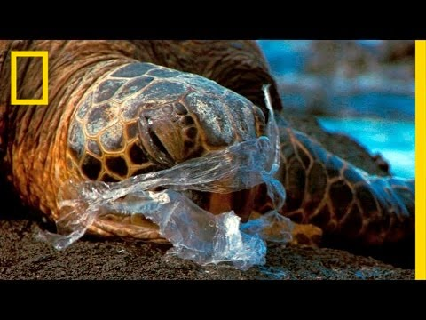 Video Of The Week | See How It Feels to Be an Ocean Animal Stuck in a Plastic Bag | National Geographic
