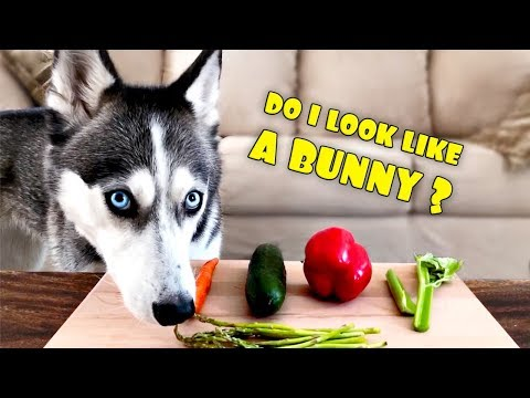 Will My Huskies Eat Their Veggies? Vegetable Taste Test | DOG SUBTITLES