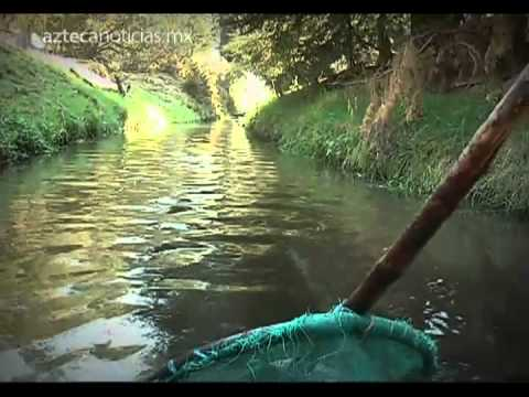 Viven de cr a y venta de truchas en zinacantepec youtube for Crianza de truchas en estanques