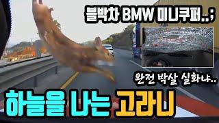 4952회. BMW 미니쿠퍼 위에 고라니가 떨어져 차가…