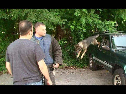 Protective Dog Obedience (K9-1.com)