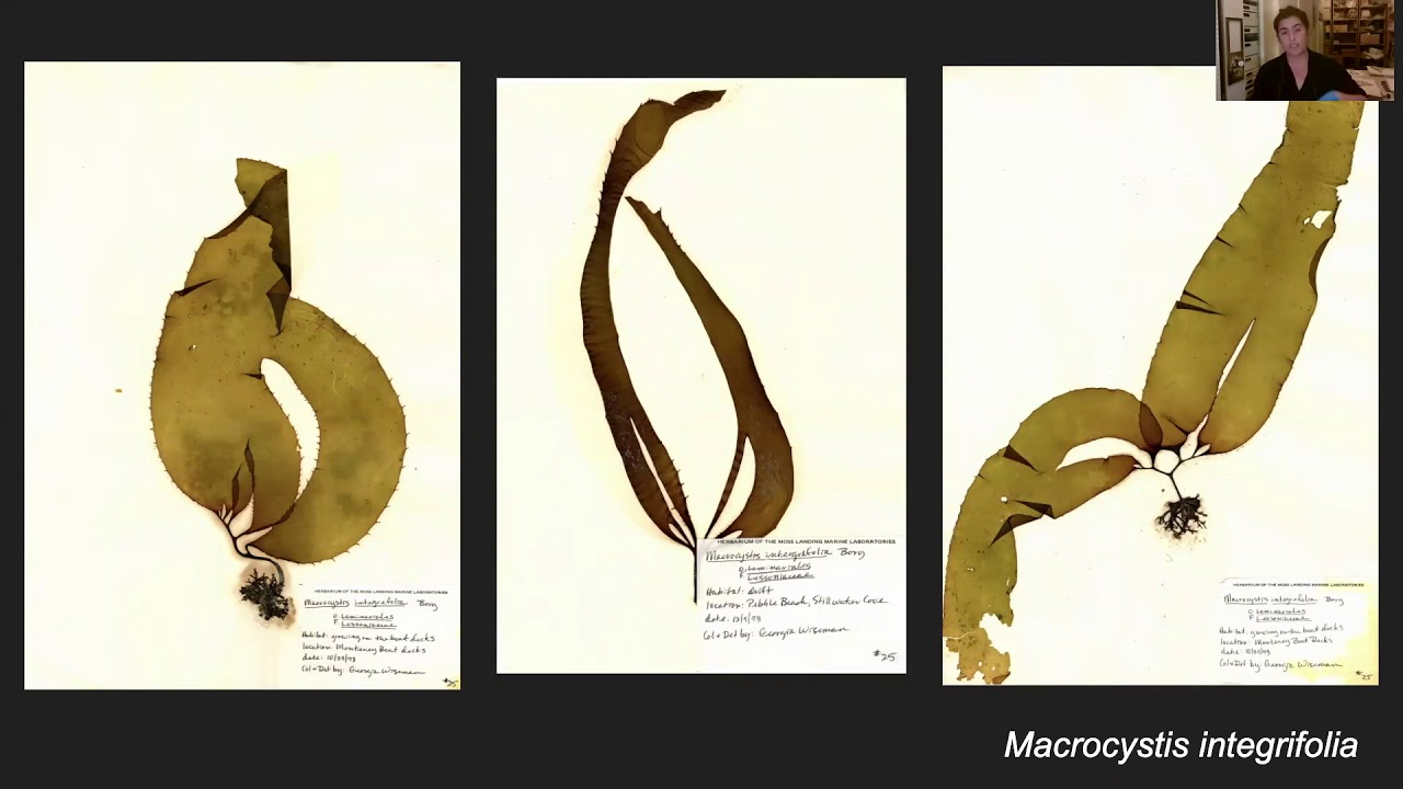 Download Collections Close-Up: Kelp and Conservation