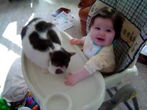 Cat Sucker Punches Baby