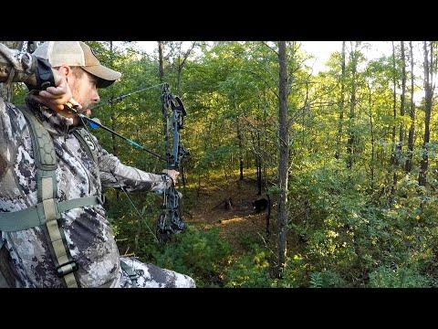 Bow Hunting Wisconsin Black Bears