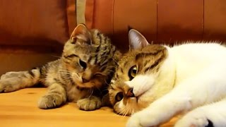 Don't sleep, bro !  Funny Cats video