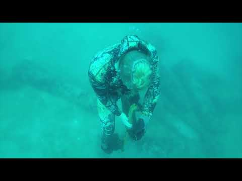 Freediving Spearfishing Stuart, Boca Grande, Naples, And The Florida Keys