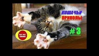 ★ КОШАЧЬИ ПРИКОЛЫ # 3 ! ★ CAT JOKES #3 !