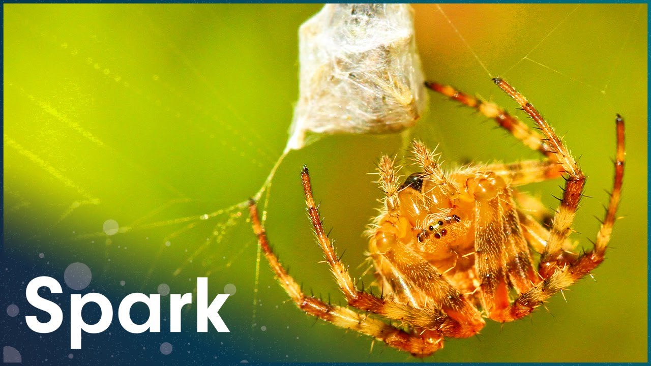 Download The Most Dangerous Spiders In The Word | World's Worst Venom | Spark