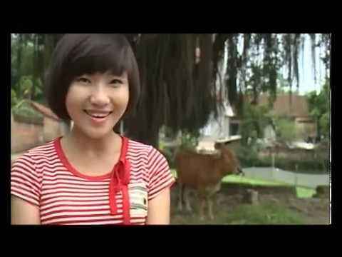 MO HINH NUOI CHIM BO CAU PHAP CONG NGHIEP - Trại bồ câu Sáng Tạo
