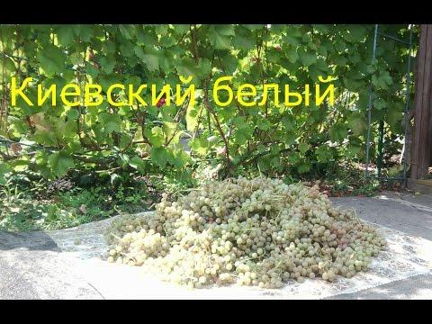 Мешочки для защиты винограда от ос купить BonnetКа 0985674877 .