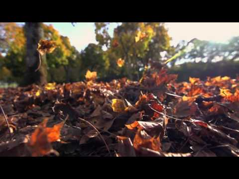 autumn leaves fall season nature colorful leaves slow motion h494vir  D