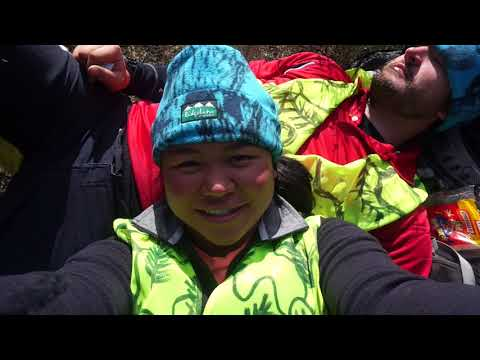 Erua Forest, Tongariro National Park, Smarts Go Hunting
