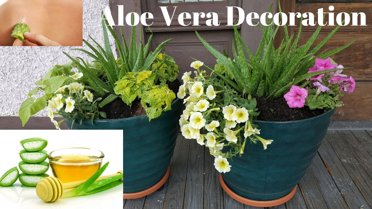 flower pot arrangements with aloe vera plants youtube. Black Bedroom Furniture Sets. Home Design Ideas