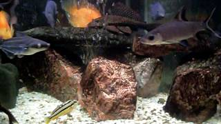 угловой аквариум(угловой аквариум., 2014-09-29T17:32:06.000Z)