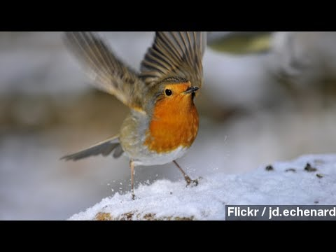 Our Electronics May Be Messing Up Birds' Migratory Patterns