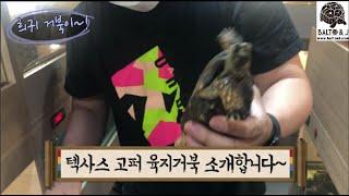희귀 거북이 텍사스 고퍼 육지거북이 분양 합니다~ ^^
