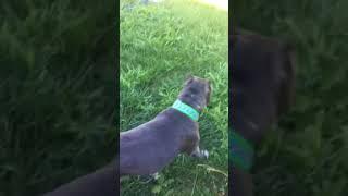 Dharma playing outside