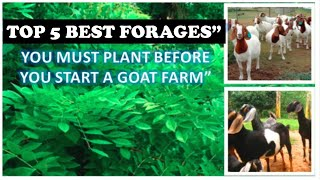 Best Goats Food you must have in your farm