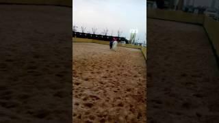 Horse video katara Qatar__funny thing😍_Naser shamed😃