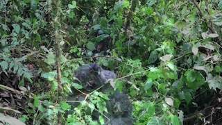 Uganda - solo road trip 2