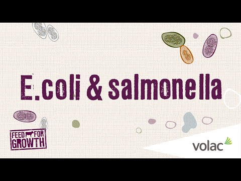 E. Coli And Salmonella - Feed For Growth