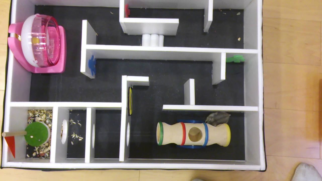 ... Tang&Danny Chen-Hamster Maze(9th Grade Science Fair Project) - YouTube