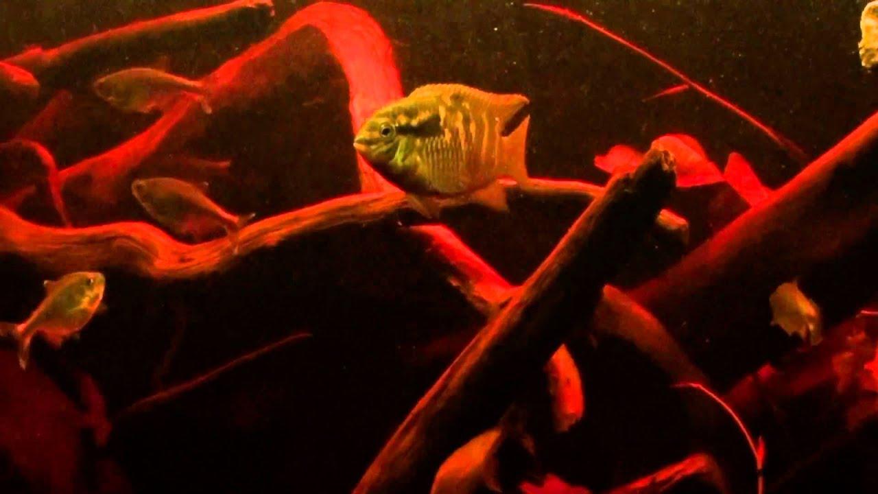 Blackwater Aquarium Youtube