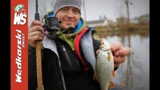 Łowienie płoci i leszczy na lekki feeder w Kanale Żerańskim