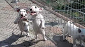 Купите плюшевую собаку с бесплатной доставкой по воронежу в интернет магазине дочки-сыночки, цены от 59 руб. , в наличии 79 моделей мягких.