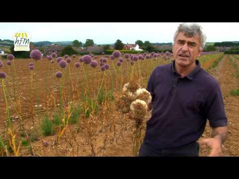 The Garlic Farm - Hampshire Garlic, Isle of Wight - Hampshire Farmers Markets