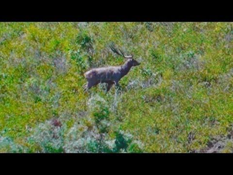 Hunting Rusa deer in New Caledonia part 19