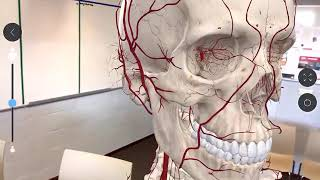 Human Anatomy Atlas 2019 Medical Wiki - Woxy