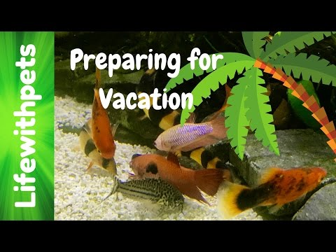 Preparing Our Pets For Vacation