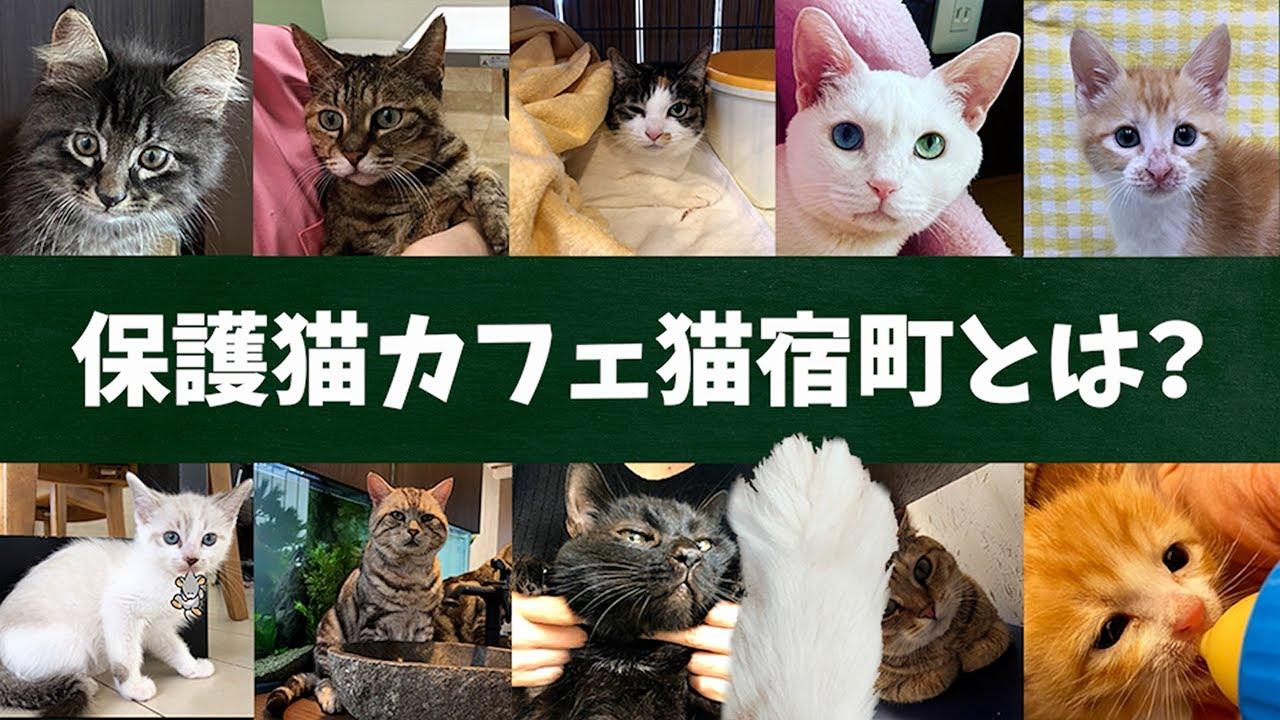 保護 猫 カフェ
