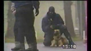 Tactical K-9 Police Dogs In Action