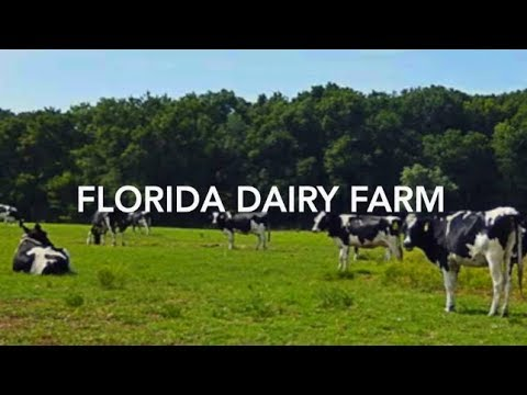 Florida Dairy Farm For Sale