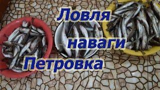 Зимняя рыбалка на Петровке ловля наваги самураи в Атаке Приморский край 2019