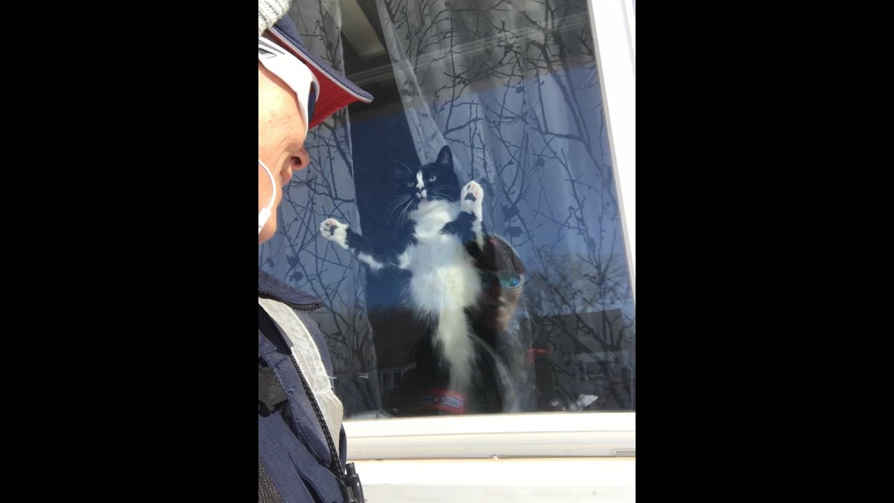 Canada Post Mail Carrier VS Attack CatEVERY SINGLE DAYlove – Mail Carrier Job