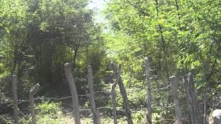 Song #1: Tegucigalpa