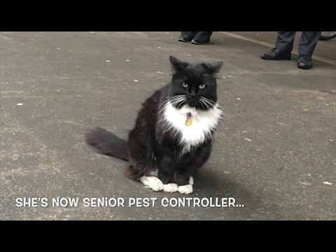 Meet Huddersfield's Railway Cat: Felix