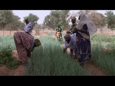 L'irrigation goutte à goutte au Burkina Faso