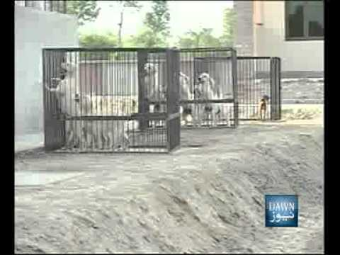 News Package-Dog-Traning-Center-Lahore-PKG, Travel Video