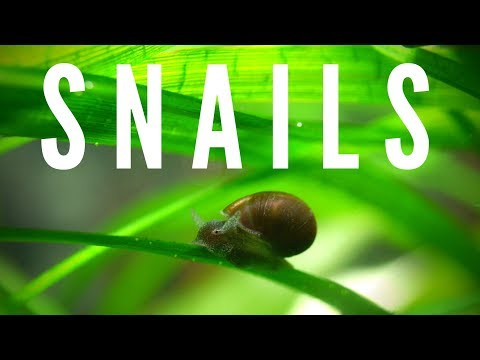 Are Snails Good Or Bad?