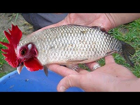 10 Unusual Creatures You Won't Believe Exist